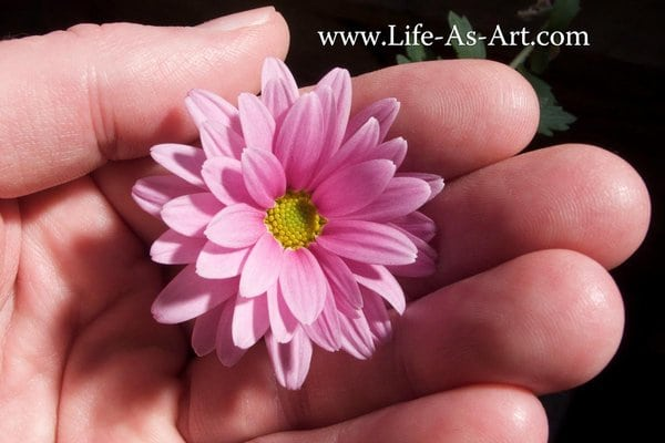 xp3-dot-us_L1050091_flower-hand_6x4_life-as-art